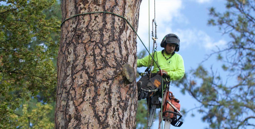 Tree Company Saint Louis MO